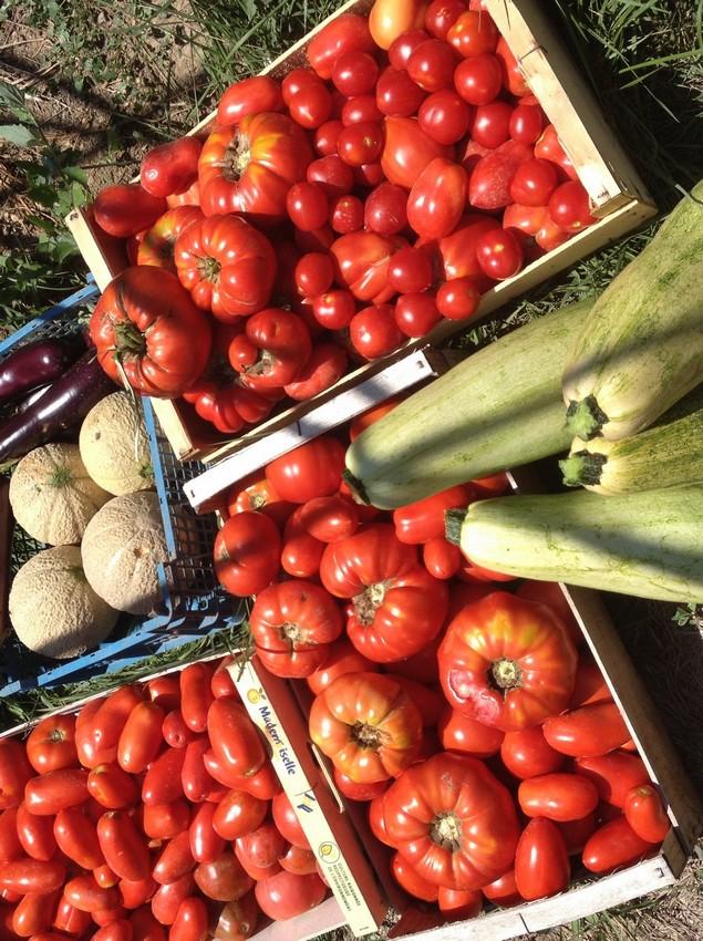 Tautavel-Dvillage-jardin-légume-bio-66-pays-cathare